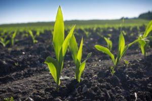 seedlings spaced